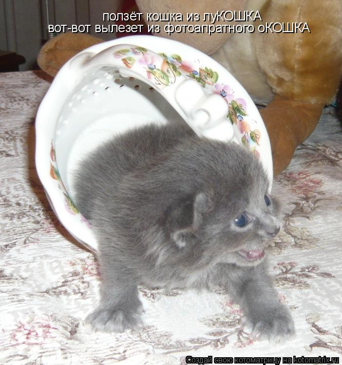 Котоматрица: ползёт кошка из луКОШКА вот-вот вылезет из фотоапратного оКОШКА