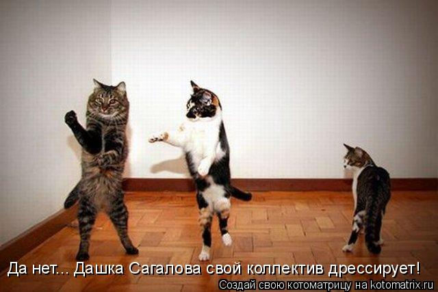 Котоматрица: Да нет... Дашка Сагалова свой коллектив дрессирует!