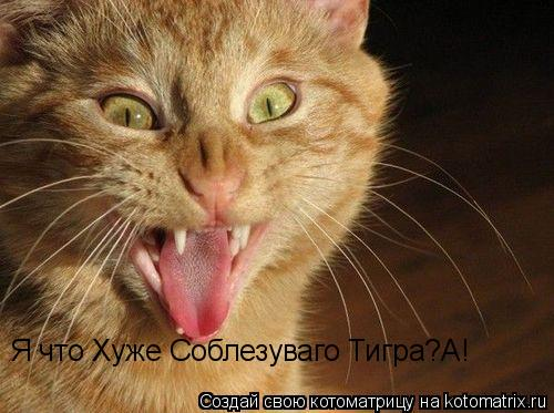 Котоматрица: Я что Хуже Соблезуваго Тигра?А!