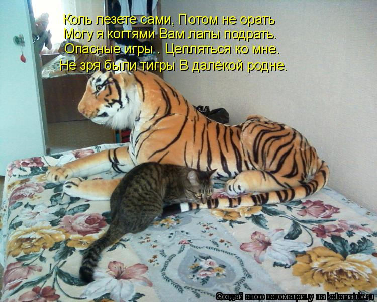 Котоматрица: Коль лезете сами, Потом не орать   Могу я когтями Вам лапы подрать.  Опасные игры – Цепляться ко мне. Не зря были тигры В далёкой родне.