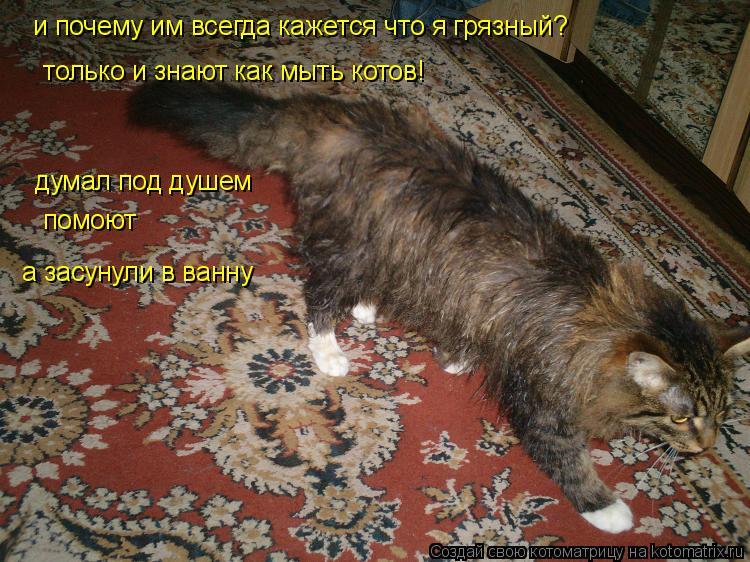Котоматрица: и почему им всегда кажется что я грязный?  только и знают как мыть котов!  думал под душем    помоют   а засунули в ванну