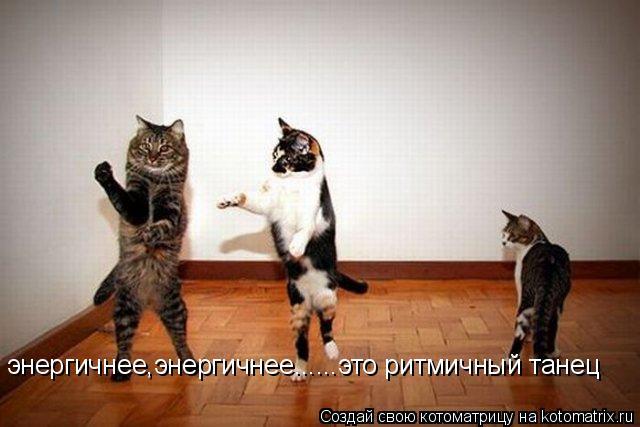 Котоматрица: энергичнее,энергичнее......это ритмичный танец