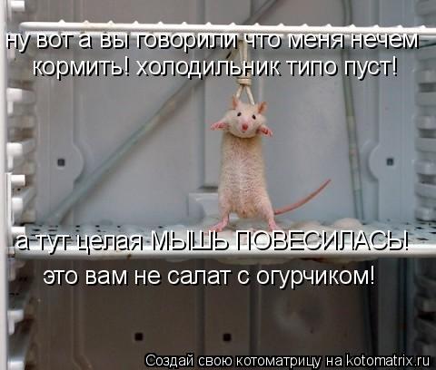 Котоматрица: ну вот а вы говорили что меня нечем кормить! холодильник типо пуст! а тут целая МЫШЬ ПОВЕСИЛАСЬ! это вам не салат с огурчиком!