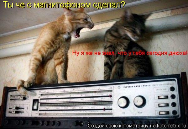 Котоматрица: Ты че с магнитофоном сделал? Ну я же не знал, что у тебя сегодня днюха!