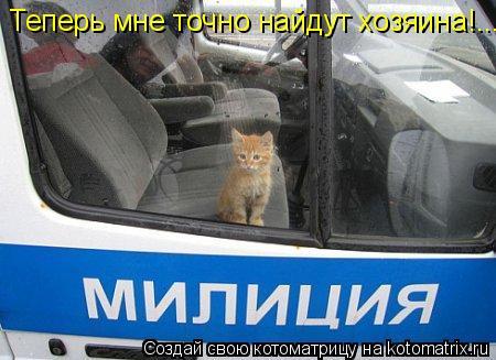 Котоматрица: Теперь мне точно найдут хозяина!...