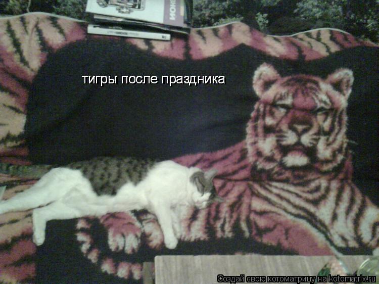 Котоматрица: тигры после праздника тигры после праздника тигры после праздника