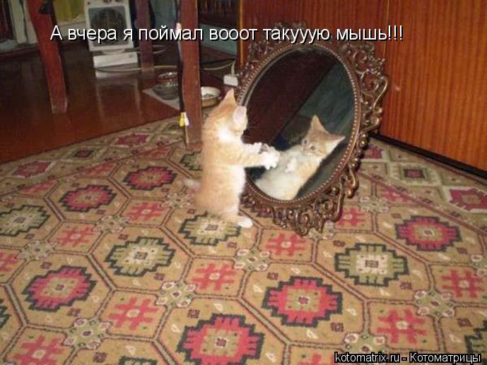 Котоматрица: А вчера я поймал вооот такууую мышь!!!