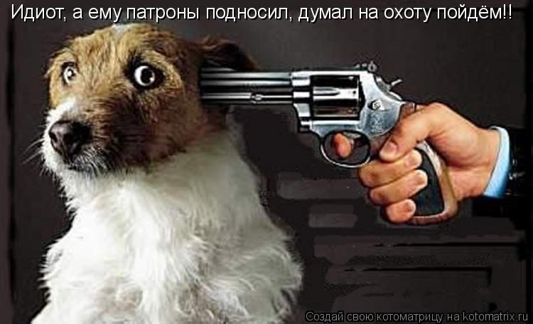 Котоматрица: Идиот, а ему патроны подносил, думал на охоту пойдём!!