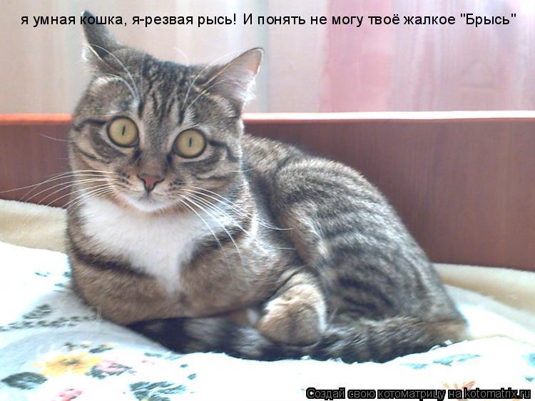 """Котоматрица: я умная кошка, я-резвая рысь! И понять не могу твоё жалкое """"Брысь"""""""