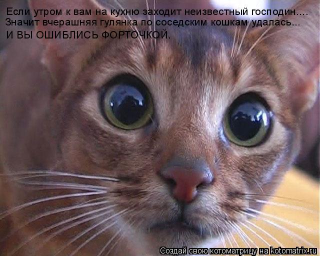 Котоматрица: Если утром к вам на кухню заходит неизвестный господин.... Значит вчерашняя гулянка по соседским кошкам удалась... И ВЫ ОШИБЛИСЬ ФОРТОЧКОЙ.