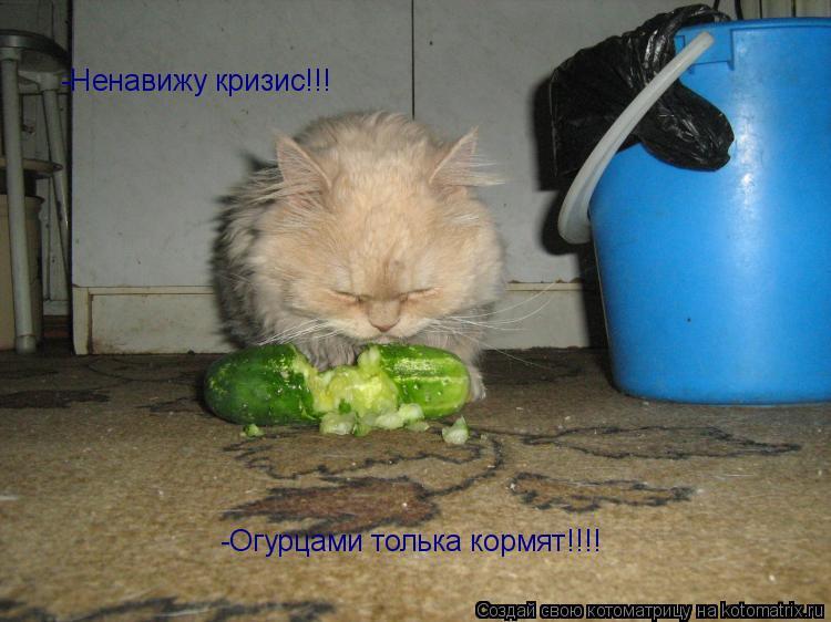 Котоматрица: -Ненавижу кризис!!! -Огурцами толька кормят!!!!