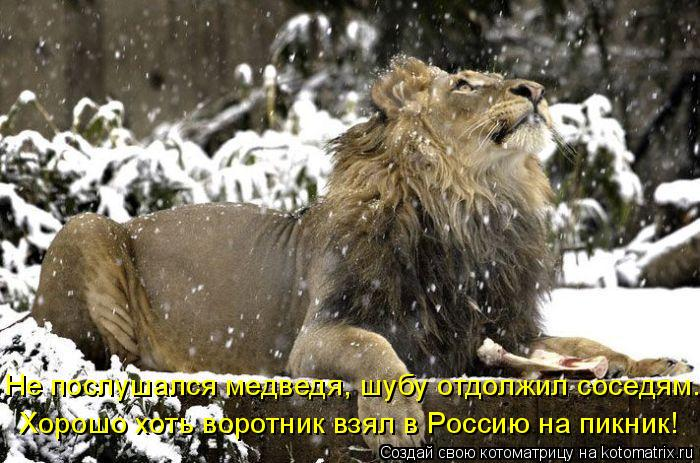 Котоматрица: Хорошо хоть воротник взял в Россию на пикник! Не послушался медведя, шубу отдолжил соседям.