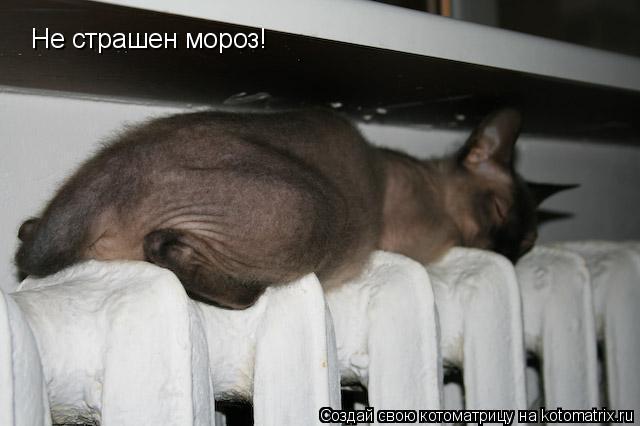 Котоматрица: Не страшен мороз!