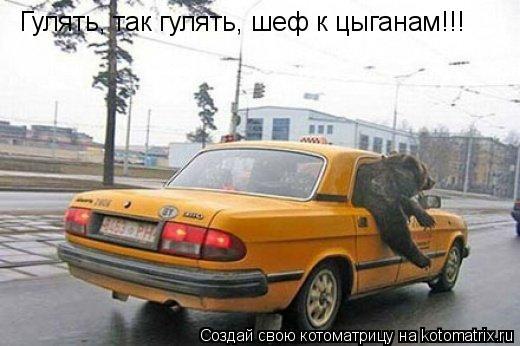 Котоматрица: Гулять, так гулять, шеф к цыганам!!!