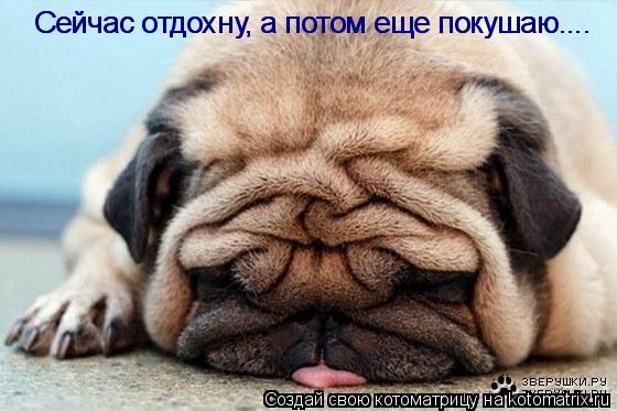 Котоматрица: Сейчас отдохну, а потом еще покушаю.... Сейчас отдохну, а потом еще покушаю....