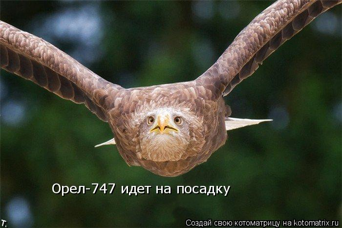Котоматрица: Орел-747 идет на посадку