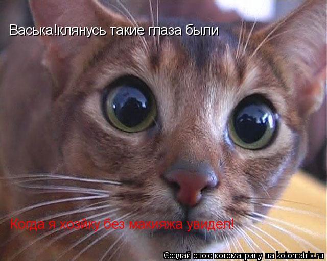 Котоматрица: Васька!клянусь такие глаза были Когда я хозйку без макияжа увидел!