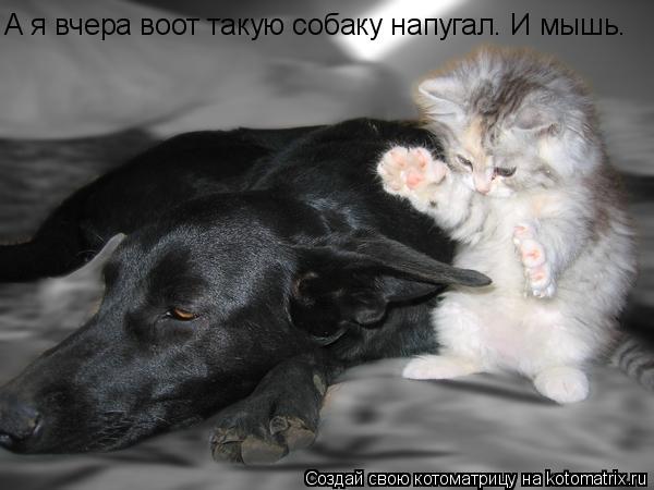 Котоматрица: А я вчера воот такую собаку напугал. И мышь.