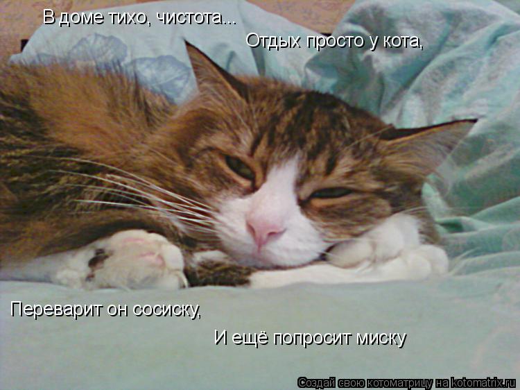 Котоматрица: В доме тихо, чистота... Отдых просто у кота, Переварит он сосиску, И ещё попросит миску