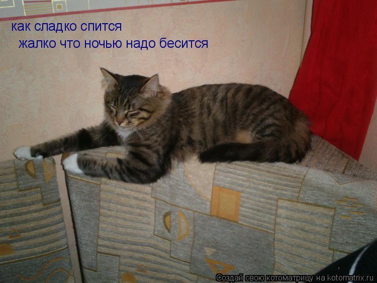 Котоматрица: как сладко спится   жалко что ночью надо бесится