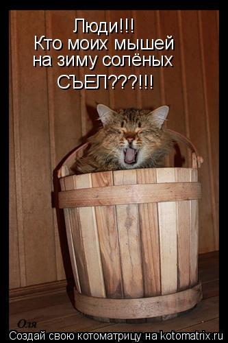 Котоматрица: Люди!!!  Кто моих мышей на зиму солёных СЪЕЛ???!!!