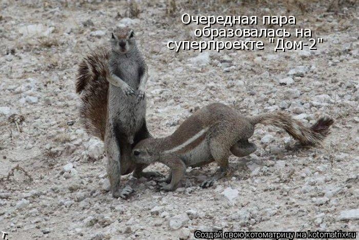 """Котоматрица: Очередная пара  образовалась на  суперпроекте """"Дом-2"""""""