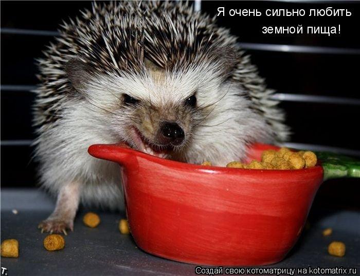 Котоматрица: Я очень сильно любить земной пища!