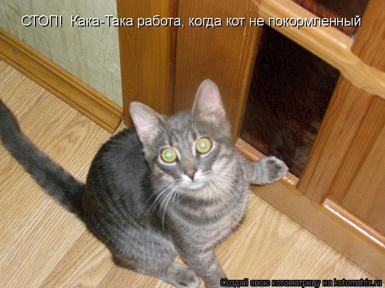 Котоматрица: СТОП!  Кака-Така работа, когда кот не покормленный