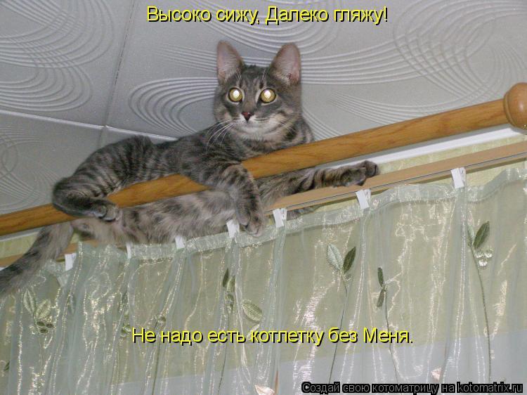 Котоматрица: Высоко сижу, Далеко гляжу!   Не надо есть котлетку без Меня.