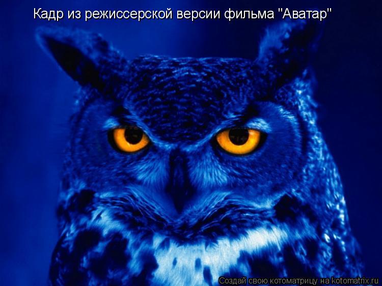 """Котоматрица: Кадр из режиссерской версии фильма """"Аватар"""""""