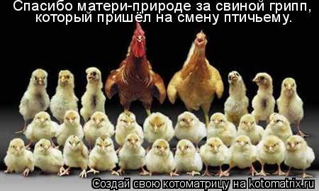 Котоматрица: Спасибо матери-природе за свиной грипп,  который пришёл на смену птичьему.