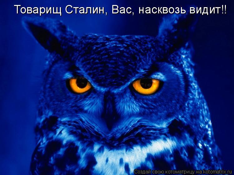 Котоматрица: Товарищ Сталин, Вас, насквозь видит!!