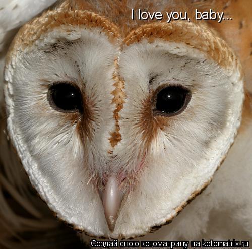 Котоматрица: I love you, baby...