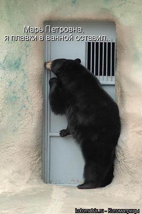 Котоматрица: Марь Петровна,  я плавки в ванной оставил..