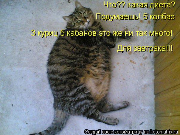 Котоматрица: Что?? какая диета? Подумаешь! 5 колбас 3 куриц 5 кабанов это же ни так много! Для завтрака!!!