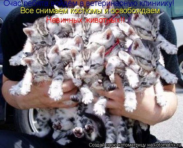 Котоматрица: Счас ребята войдём в ветеринарную клиниику! Все снимаем костюмы и освобождаем  Невинных животных!!