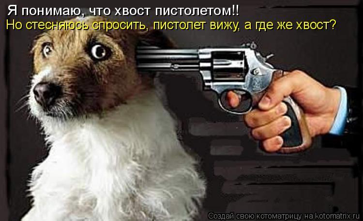 Котоматрица: Я понимаю, что хвост пистолетом!! Но стесняюсь спросить, пистолет вижу, а где же хвост?