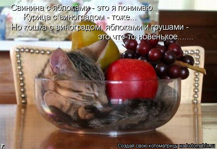 Котоматрица: Свинина с яблоками - это я понимаю.. Курица с виноградом - тоже... Но кошка с виноградом, яблоками и грушами -  это что-то новенькое.......