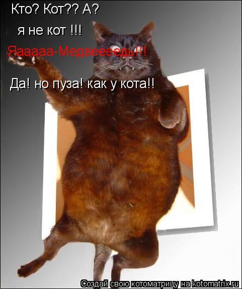 Котоматрица: Кто? Кот?? А? я не кот !!! я не кот !!! Яааааа-Медвеееедь!!! Да! но пуза! как у кота!!