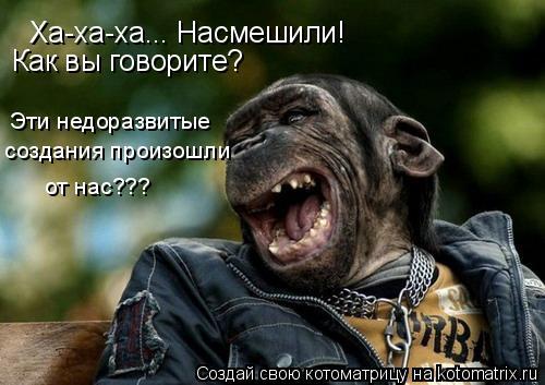 Котоматрица: Ха-ха-ха... Насмешили! Как вы говорите? Эти недоразвитые создания произошли от нас???