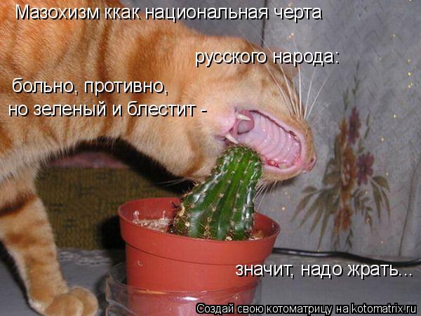 Котоматрица: Мазохизм ккак национальная черта русского народа: больно, противно, но зеленый и блестит - значит, надо жрать...