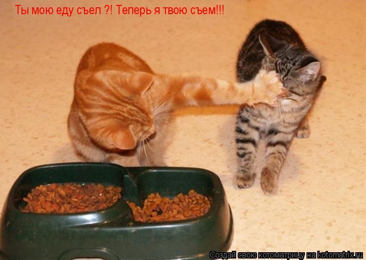Котоматрица: Ты мою еду съел ?! Теперь я твою съем!!!