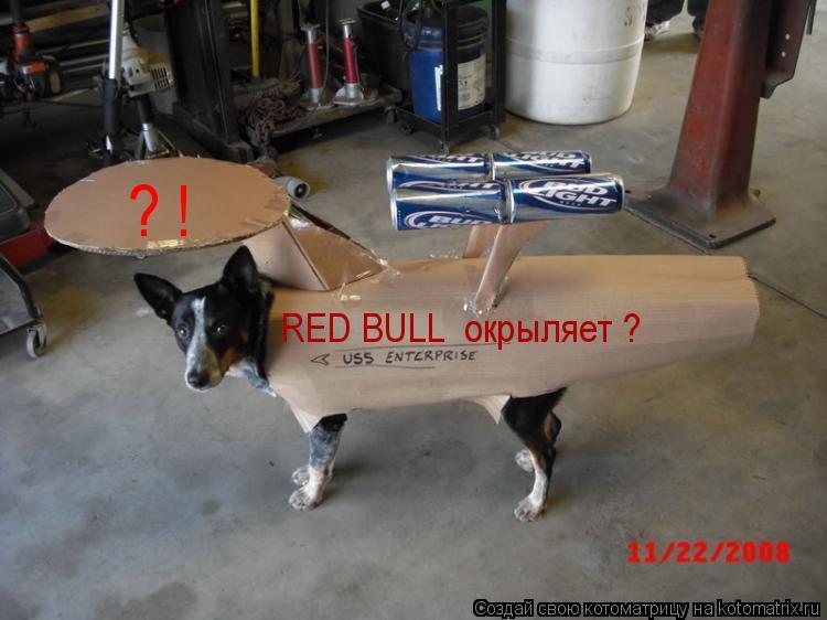 Котоматрица: RED BULL  окрыляет ? ? !