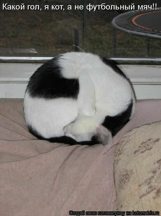 Котоматрица: Какой гол, я кот, а не футбольный мяч!!