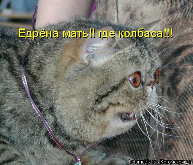 Котоматрица: Едрёна мать!! где колбаса!!!
