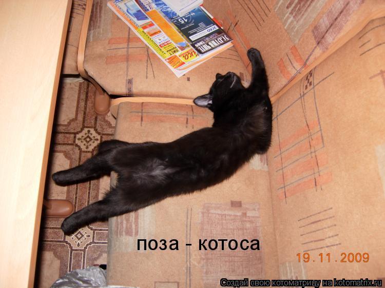 Котоматрица: поза - котоса