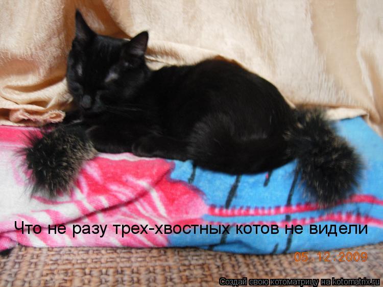Котоматрица: Что не разу трех-хвостных котов не видели