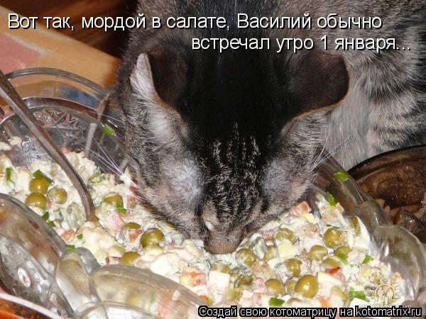 Котоматрица: Вот так, мордой в салате, Василий обычно встречал утро 1 января...