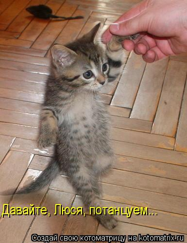 Котоматрица: Давайте, Люся, потанцуем...