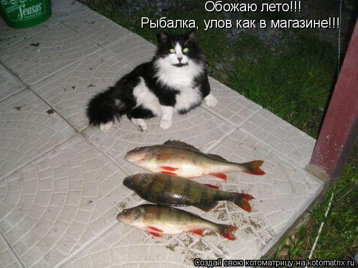 Котоматрица: Обожаю лето!!! Рыбалка, улов как в магазине!!!